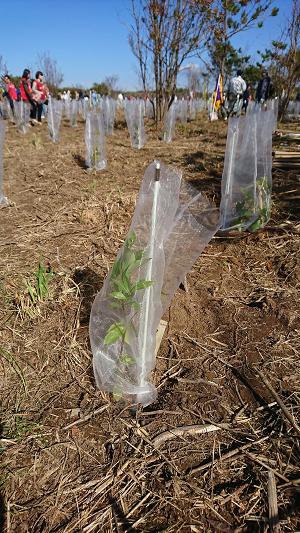 3防護ネットを被せられた植樹植物.png